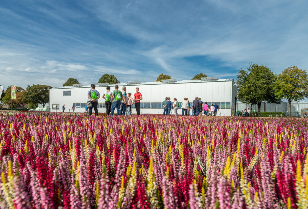 Eine Gruppe Interessierter besichtigt einen Straelener Gartenbaubetrieb mit Gewächshaus und Callunen-Feld.