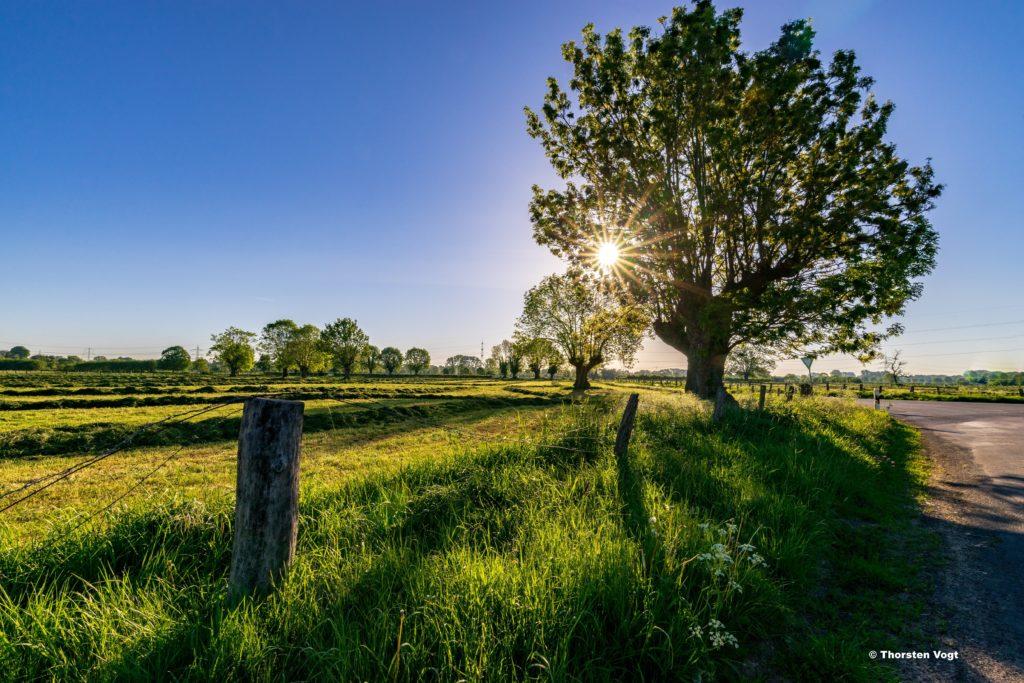 Das Bild zeigt das Naturschutzgebiet Momm-Niederung in Voerde