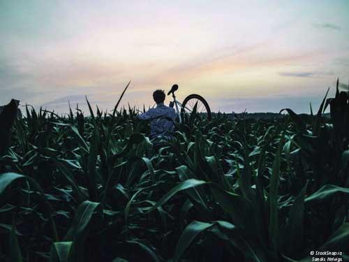 NT-Anzeige-Radfahren-Bildmaterial-edt©-StockSnap_500x375px
